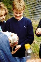 Huhn zum Anfassen